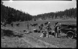 Los Alamos Ranch School students unloading supplies from truck at Valle Grande camp near Los...