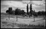 Horses threshing, Cordova, New Mexico