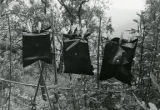 Lens photograph of pinhole soft cameras hanging on pegs outdoors