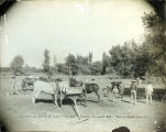 Grading Camp, Roswell, NM, Oct 1910
