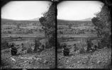 """Cattle Round-Up, White Mountains, Arizona"""